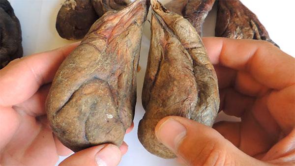 Бобровая струя при лечении простатита лечение простатита осиной корой